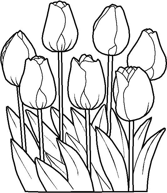 riscos e desenhos desenhos de flores para pintura
