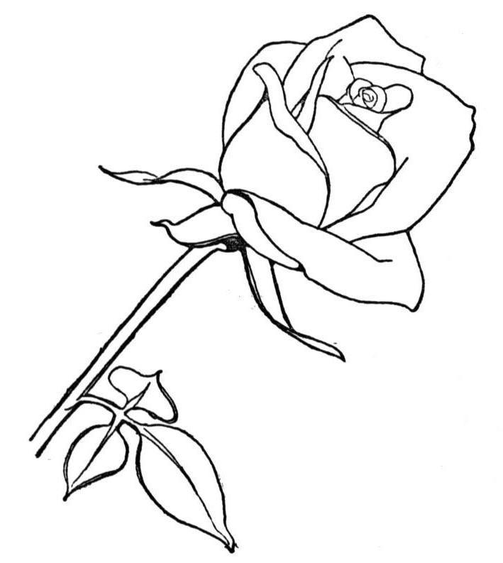 Riscos E Desenhos Riscos De Flores Para Pintura