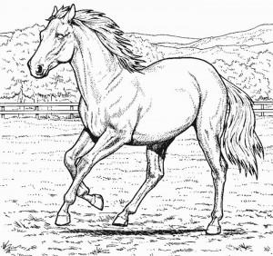 desenhos colorir pintar cavalos (2)