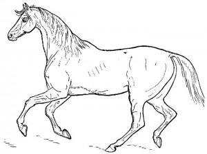 desenhos colorir pintar cavalos (3)