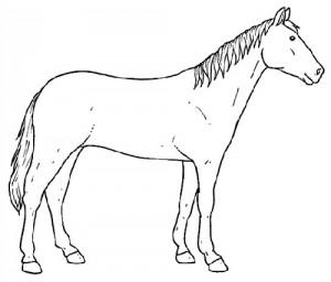 desenhos colorir pintar cavalos (5)