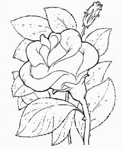 desenhos rosas pintura artesanato colorir (2)