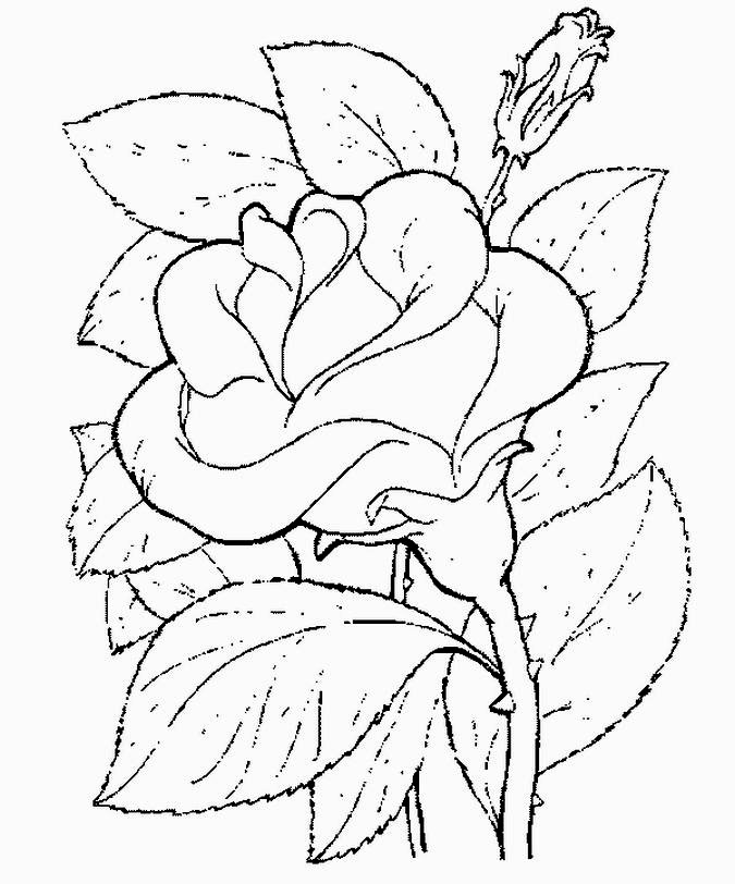yellow rose coloring pages - photo #40