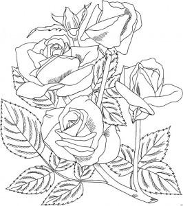 desenhos rosas pintura artesanato colorir (3)