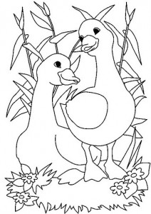 desenhos patinhos imprimir colorir atividades escola criancas (1)