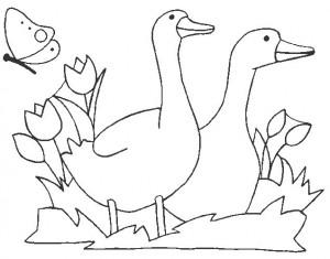 desenhos patinhos imprimir colorir atividades escola criancas (2)