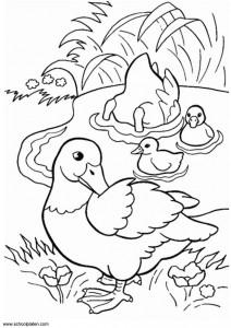 desenhos patinhos imprimir colorir atividades escola criancas (3)